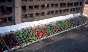 mangokisten