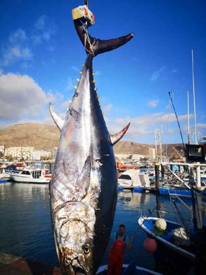 Thunfisch1