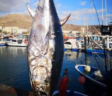 Thunfisch11